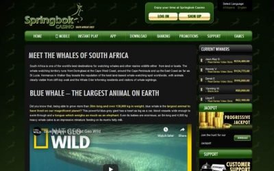 Springbok Casino Pays Tribute to the Magnificent Whales of South Africa's Oceans