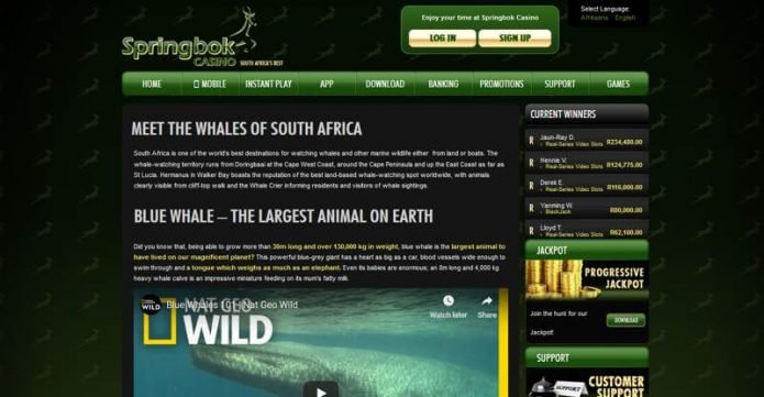 Whales of South Africa