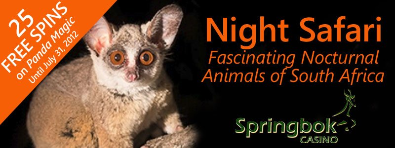 Springbok Casino Enjoys South African Night Life in Tribute to Fascinating Nocturnal Animals