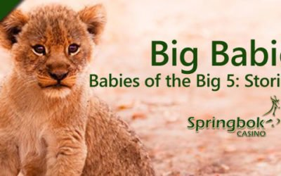 Springbok Casino's Wildlife Babies of the Big 5
